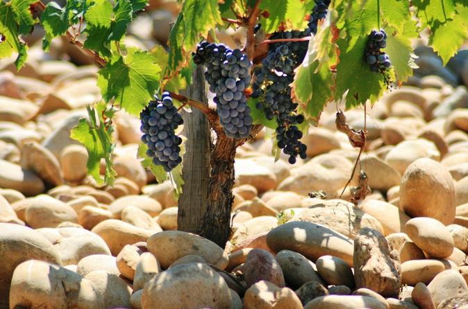 France's most versatile wines: Côtes duRhône